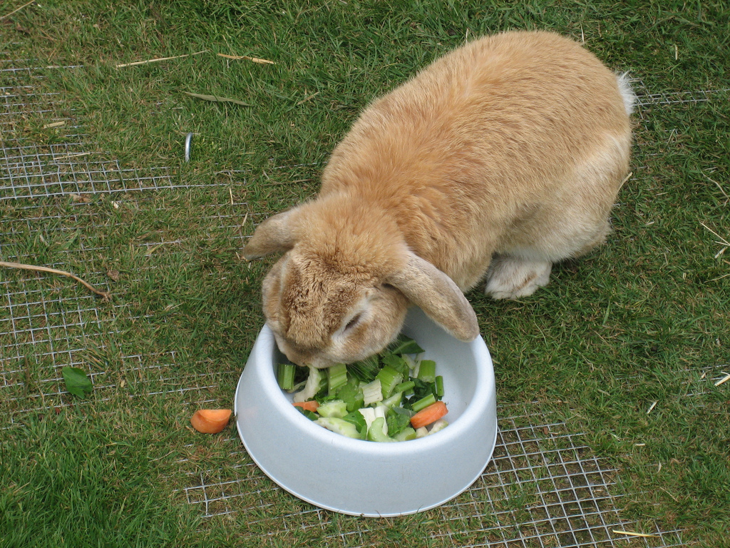 Chinchilla Rabbit Food Rabbit-food.jpg